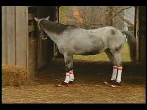 e8faf8912f08 A Horse Wearing Chuck Taylors - YouTube