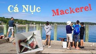 Cả Nhà Đi Câu Cá Nục Tươi Ngon Ở Canada-Catching Mackerel Fish In Nova Scotia