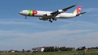 Lisbon Plane Spotting: TAP A340 Arriving
