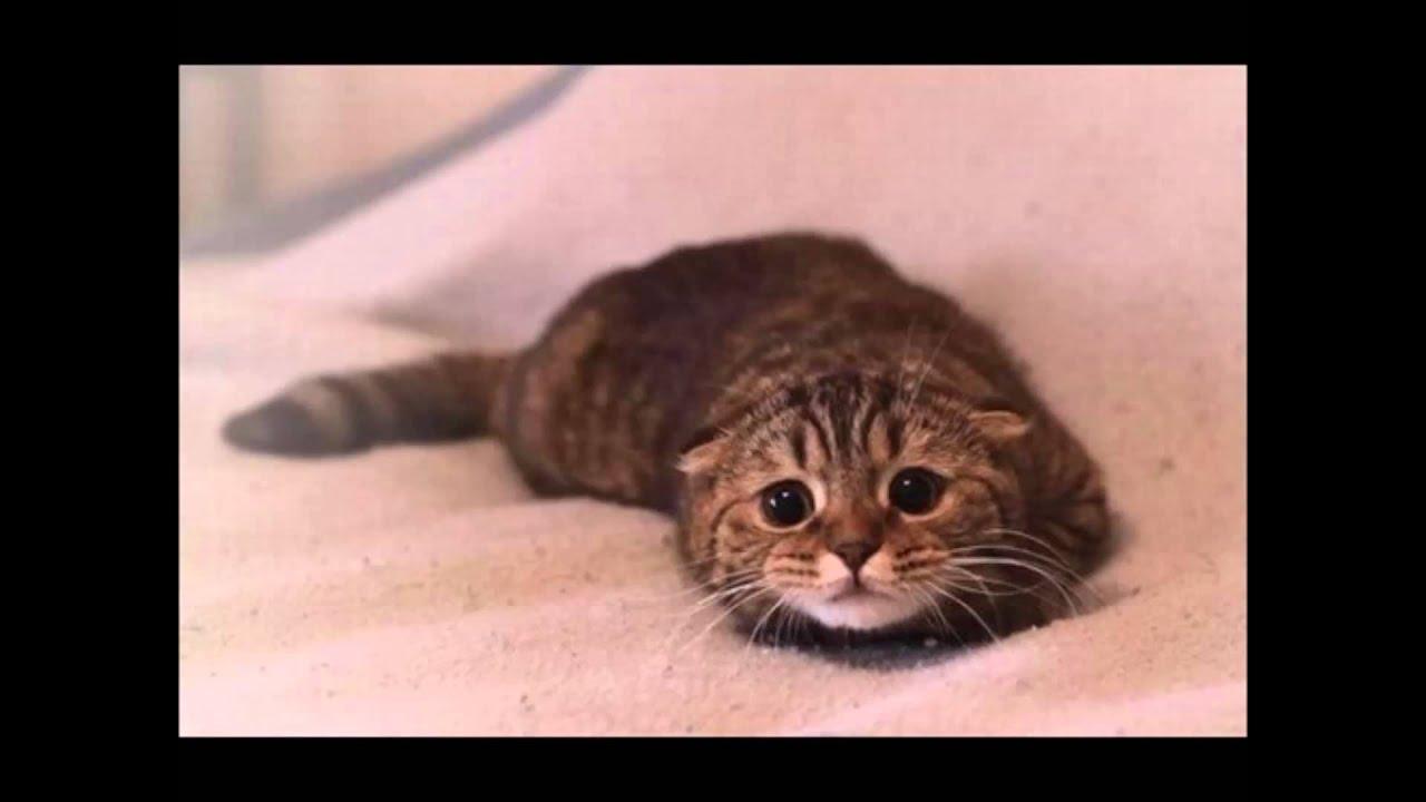 Animal Shelter advert - YouTube