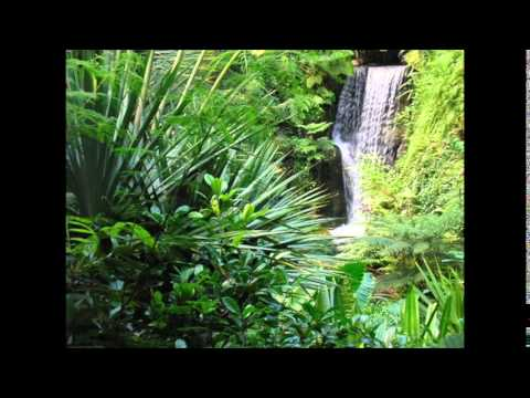 Relaxing Sound with Tropical Rainforest Music Background by Unknown Artist