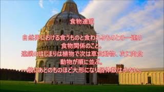 食物連鎖~梅田専太郎の生物用語集