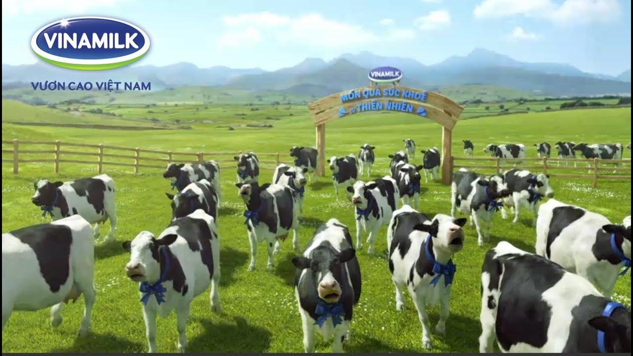 Nhạc quảng cáo Sữa bò Vinamilk Chip Chip 2018