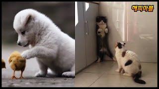 배꼽 빠지게 웃긴 냥이와 댕댕이의 영상모음 #30 Dogs and Cat Funny Moments | Funny Animals Compilation #30