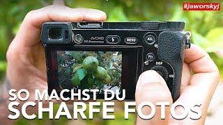 SCHARF STELLEN 📷 So FOKUSSIERST du RICHTIG - Fotografieren lernen