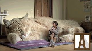 TOP 10 WORLD'S LARGEST CATS