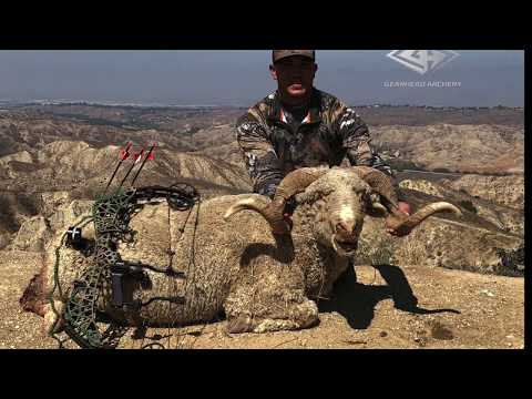 Bow Hunting Exotic Rams In California