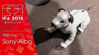 #IFA18: Sony Aibo - chó máy nay đã cute hơn, thông minh hơn và tình cảm hơn