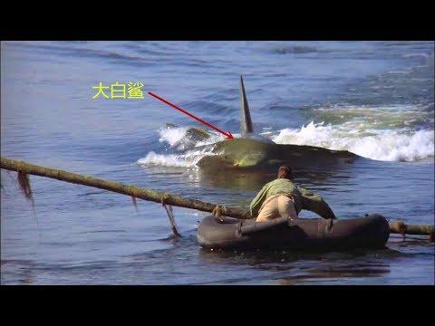 3分钟看美国经典恐怖片《大白鲨2》,母鲨复仇之战