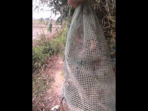 Bat chuot cong