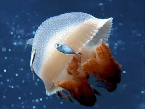 Underwater Jellyfish Photography Seres de agua d...