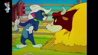 Tom And Jerry English Episodes   Funny Cartoon   Texas Tom