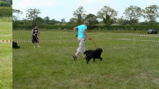 The Independent Dog Association Milton Keynes Dog Show Part 3b