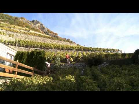 Les Vins du Valais -  Film avec Pierre Arditi.mp4