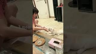 Shar pei dog breed simple basic training