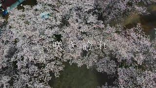 『咲き誇れ』MUSIC VIDEO  彩紫歌 Sashika