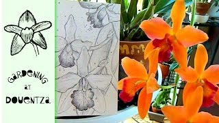 Rare Orchid Unboxing With Surprises & A Drawing