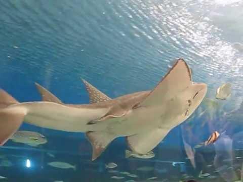 Manila Ocean Park Big Aquarium