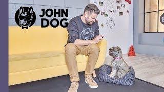 Jak mądrze wychować szczeniaka? – TRENING – JOHN DOG