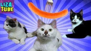 СОСИСКА Челлендж 😂 сразу 4 серии ПРИКОЛОВ 👍 СМЕШНЫЕ КОТЫ 🌸 LizaTube