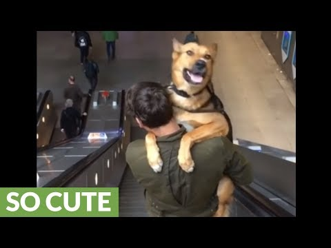 Scared dog gets carried down the escalator