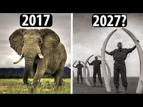 Fast Ausgestorbene Tiere