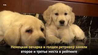 Самая популярная собака