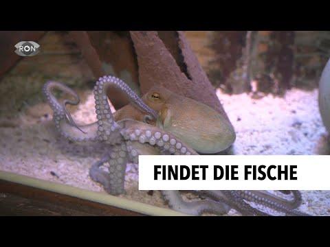 inventur-im-sea-life-speyer- -ron-tv