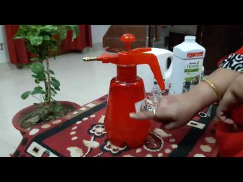 How To Make And Use Neem Oil Insecticide