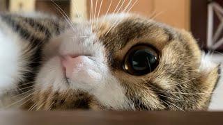 ママのトイレを覗いてくる猫たち