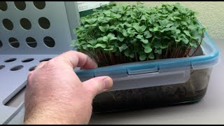 Can worms improve hydroponic microgreens?