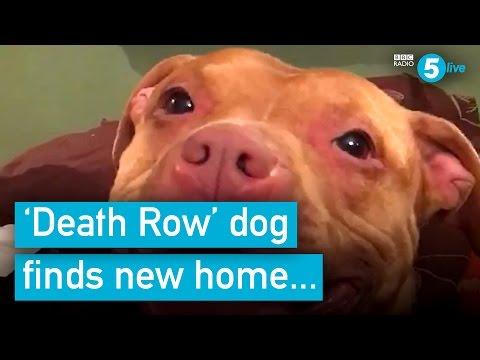 Caged dog finds new owner after facing death sentence