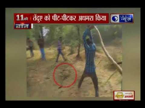 राजस्थान के भीलवाड़ा गांव में गांववालों ने तेंदुए को पीट-पीटकर अधमरा किया