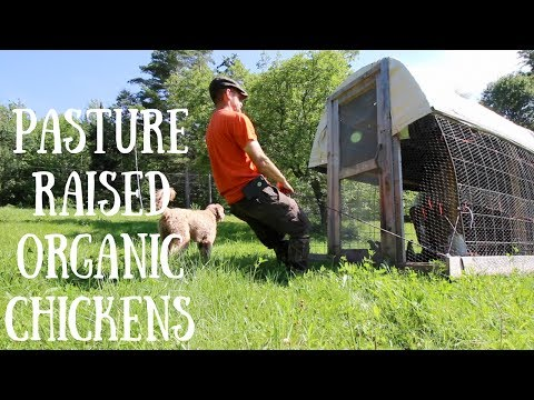How to GROW your Meat Birds For FREE!