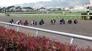 Wiener dog races: Final