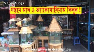 Download সস্তায় মাছ ও অ্যাকোয়ারিয়াম কিনুন | Buy Cheap Fish And Aquariums From Katabon | Dhaka Mp3 and Videos