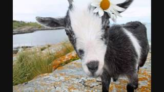 The Mobile Goat Song (Tom Cahill) ~ Allison Crowe