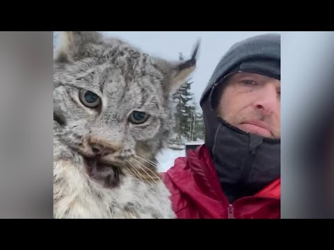 B.C. farmer lectures a lynx after it attacked his chicken coop