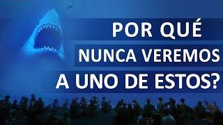 Por Qué Ningún Acuario Posee un Tiburón Blanco