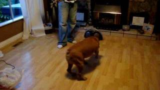 Repeat youtube video Dog gone crazy!