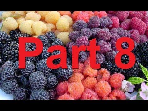RBPW 2014, Part 8- Blackcap Variety Development