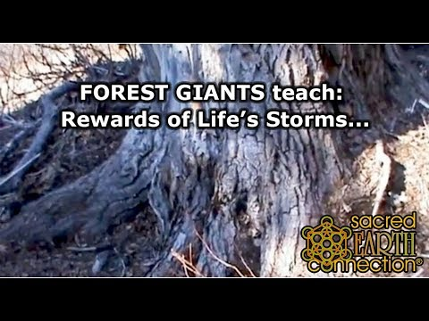 Forest giants teach us the benefits of life's storms...