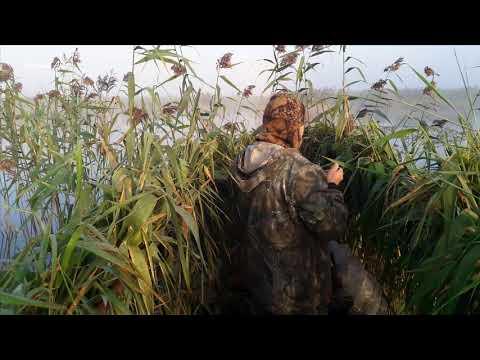 Открытие охоты на