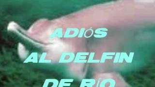 Adiós al delfín de río chino (Extinción del Baiji)