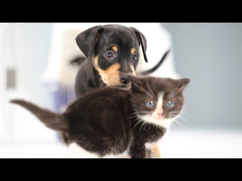 Kittens Meeting Puppies For The First Time