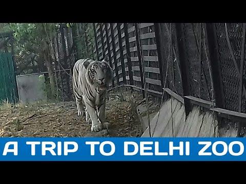 A trip to delhi zoo