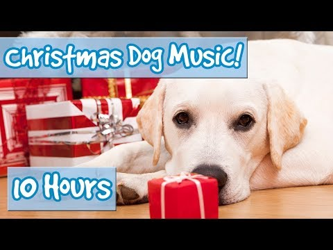 CHRISTMAS MUSIC FOR DOGS! Rudolph, Oh Christmas Tree, Joy to the World, Silent Night, Xmas for Dogs!