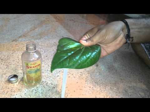 Boil treatment using Betel leaf - Easy home remedy.
