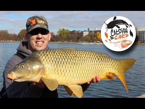 How to catch carp - carp fishing tips and techniques - carp bait