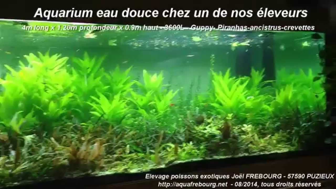 aquafrebourg net un aquarium aux dimensions peu banales en eau douce youtube. Black Bedroom Furniture Sets. Home Design Ideas